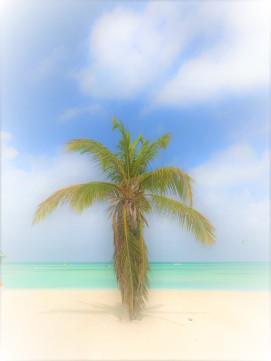 aruba palm tree edited